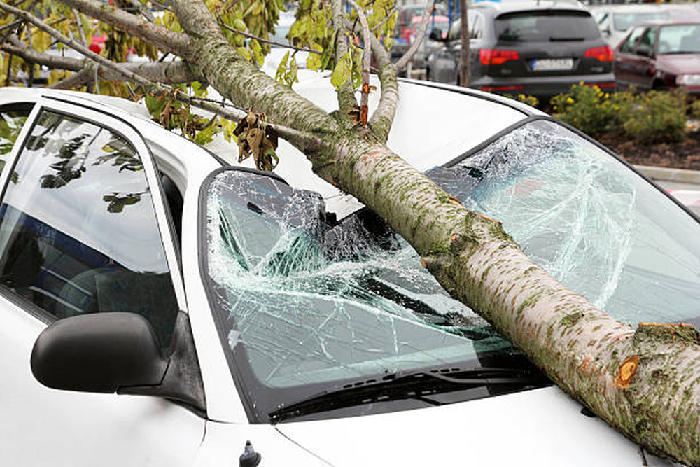 Tree falling on car and damaging it.Lucky for the low cost insurance